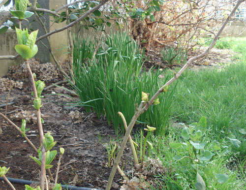Giardino in primavera - Seminala