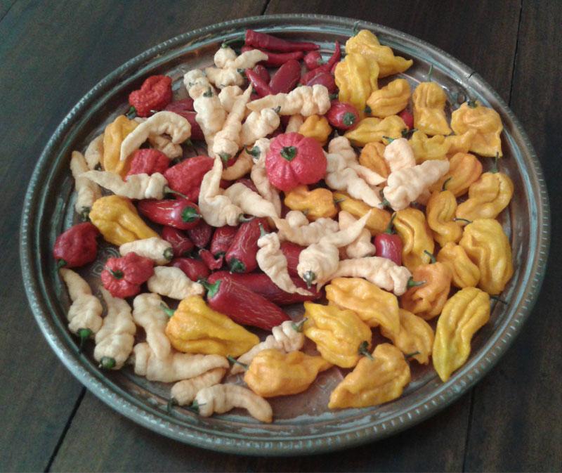 Peperoncini piccanti - Seminala