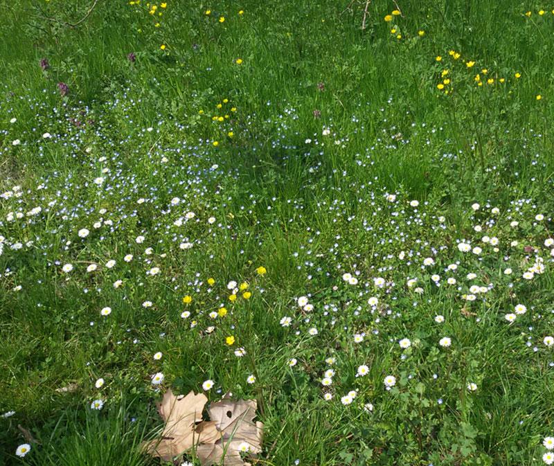 Seminala coltiva la tua passione per la terra blog for Potatura margherite