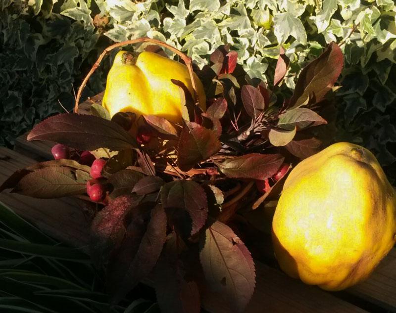 Mela. frutto antico, Seminala