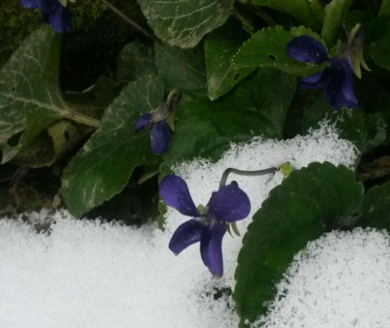 Natura e Neve, Seminala