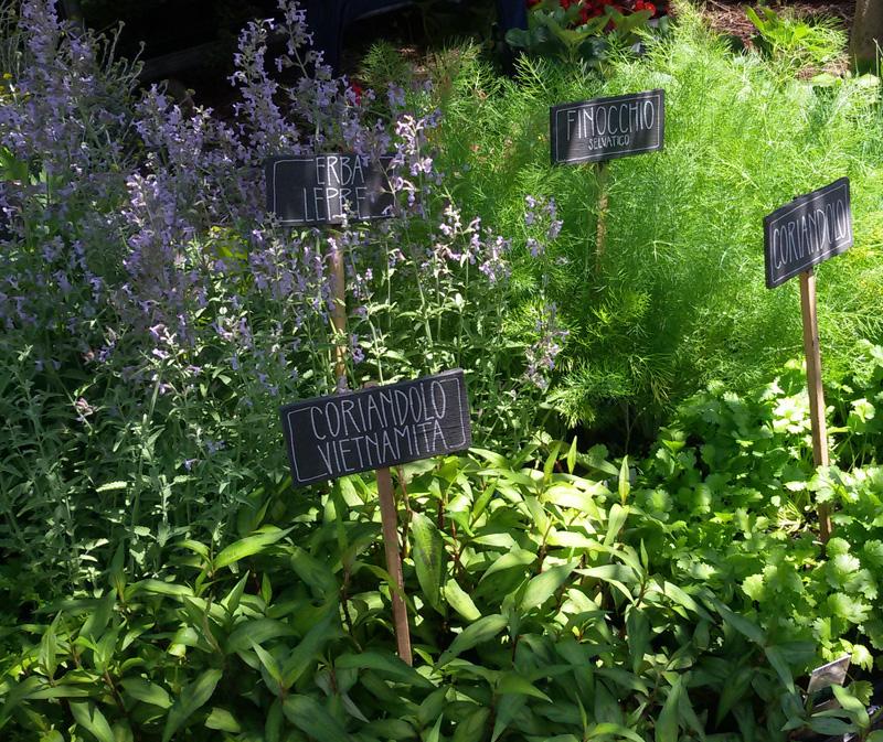 Festa delle erbe – Borgo di Rollo, Erbe aromatiche
