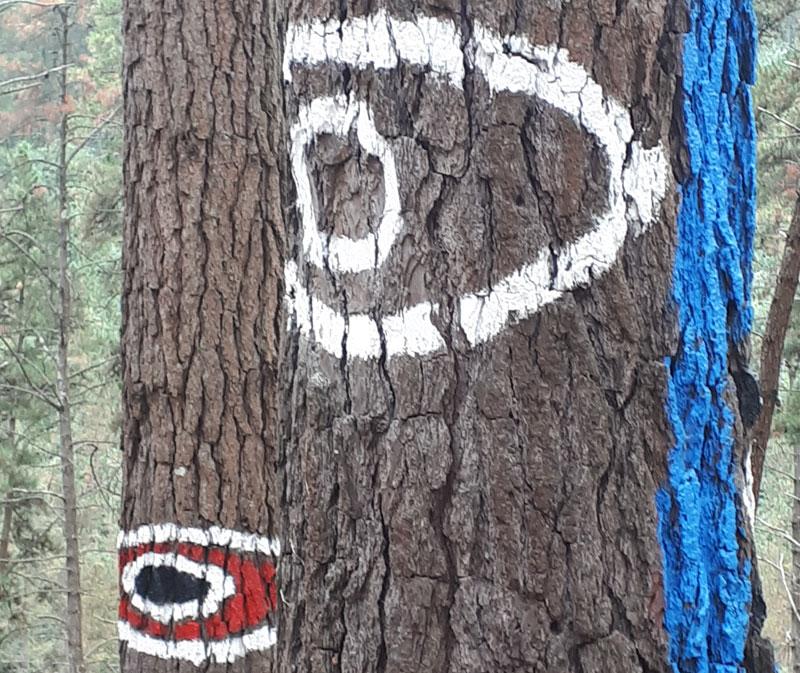 Bosque pintado de Oma, Seminala