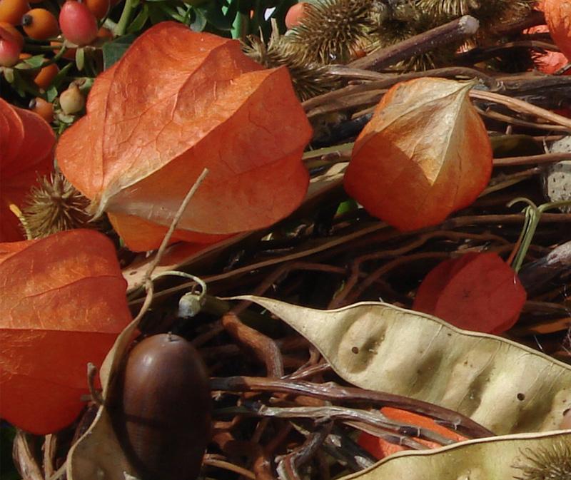 Seminala e l'autunno