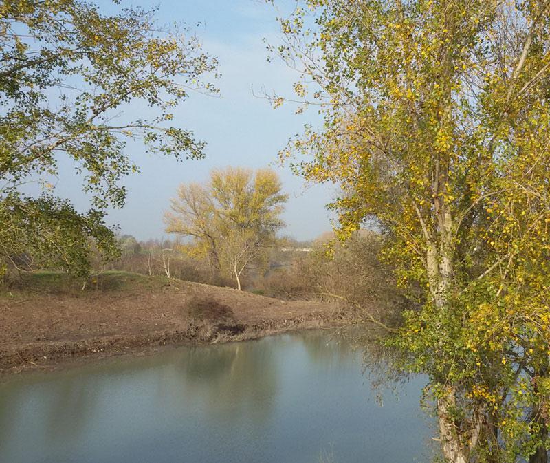 Alberi e fiume Mincio in autunno, Seminala