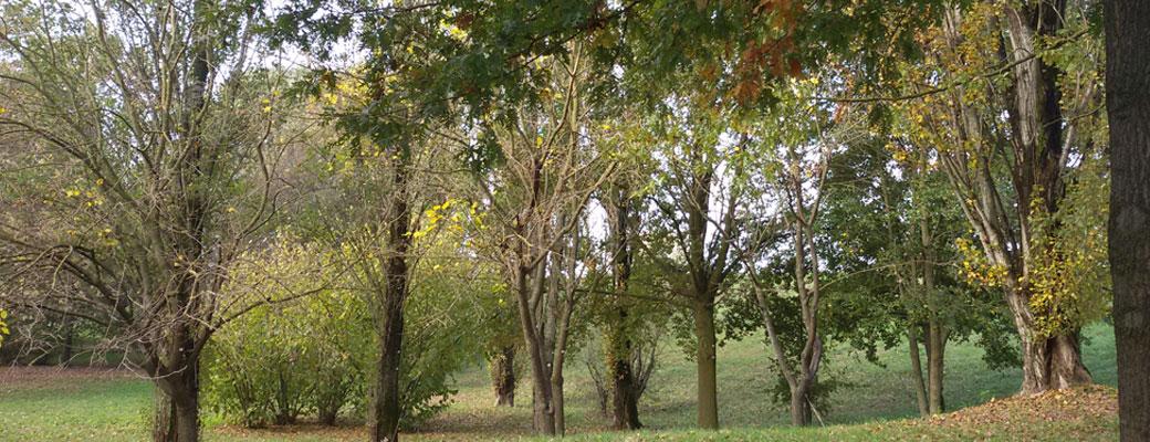 Alberi nel parco del Mincio in autunno, Seminala