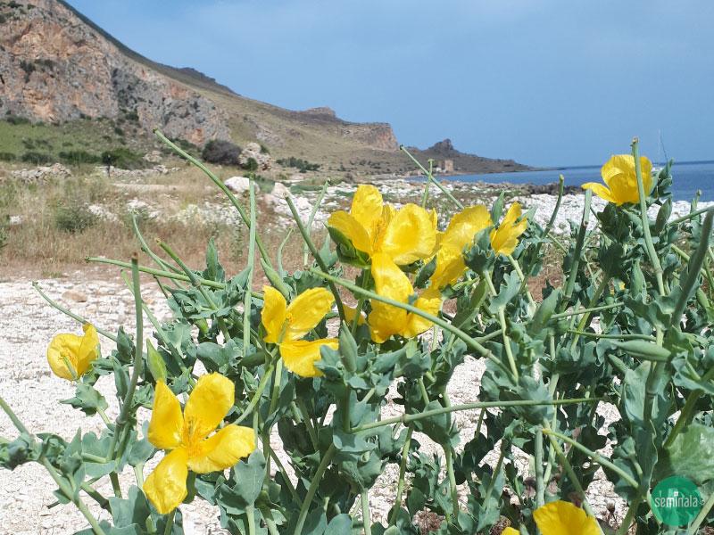 Seminala viaggio nella Riserva naturale orientata Monte Cofano, Sicilia