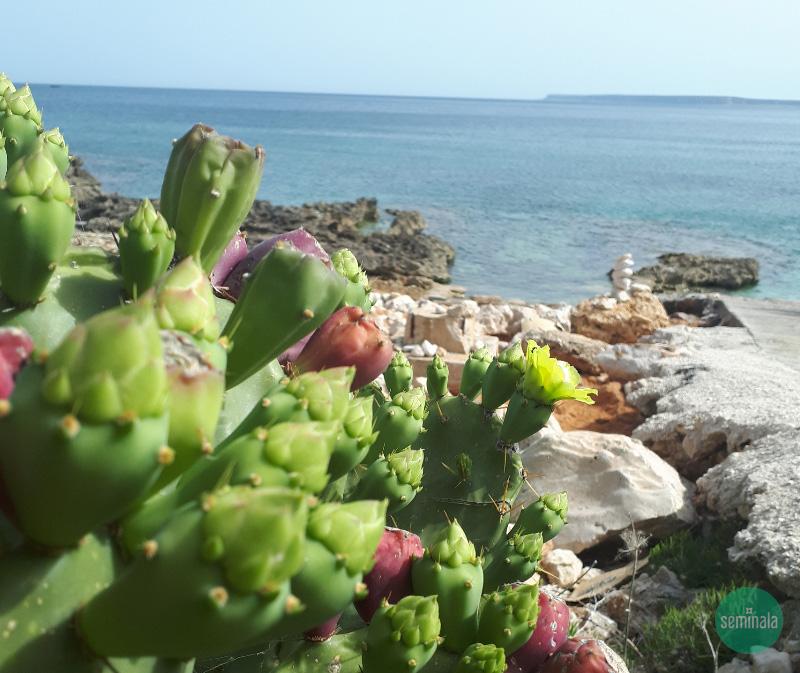 Sicilia Riserva Naturale Monte Cofano- Seminala