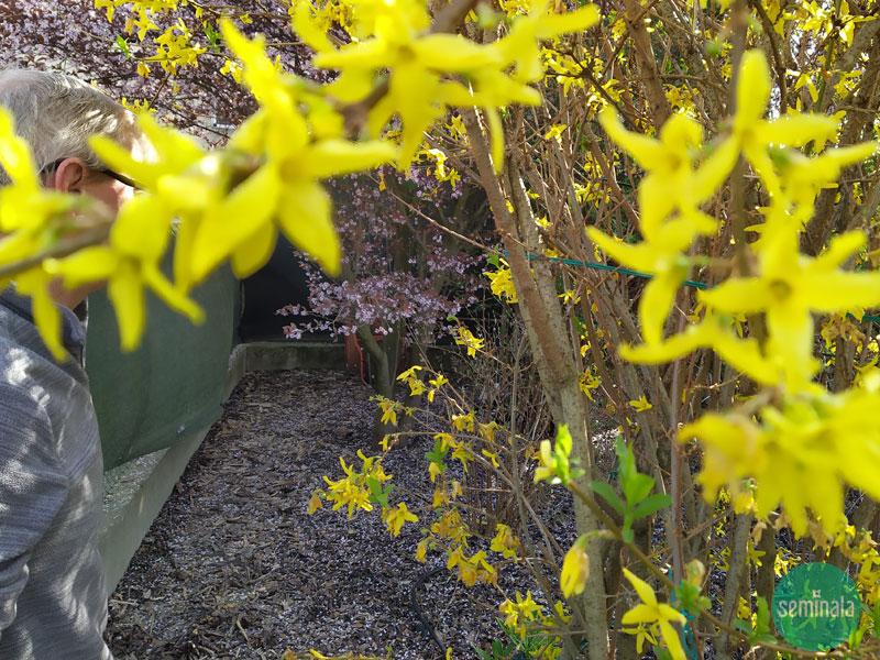 Lavori in giardino a primavera, Seminala