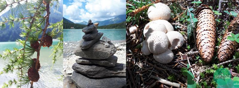 funghi, pigne,rocce,Lago di Anterselva