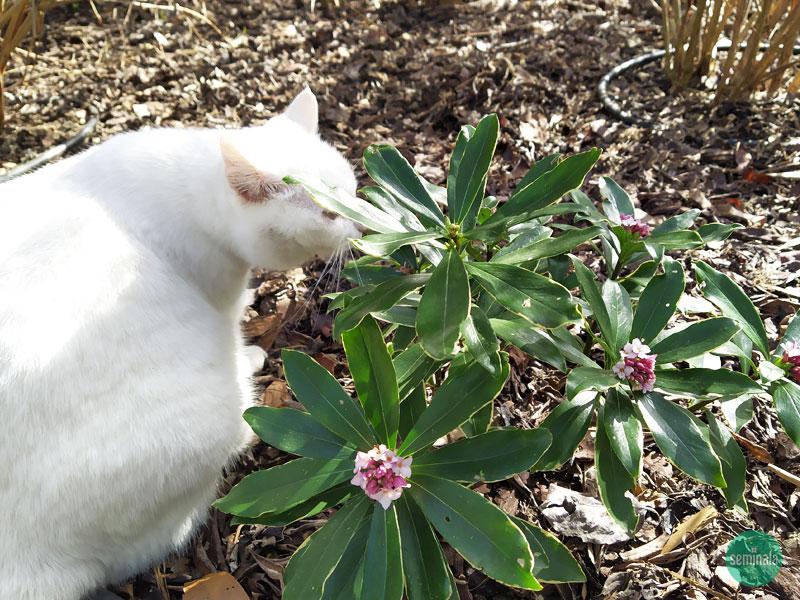 Giardino in primavera, Seminala