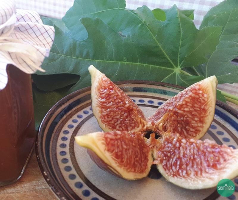 Composta di fichi, ricette di Seminala
